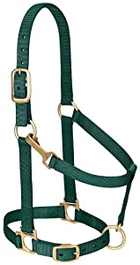 Weaver Leather Basic Adjustable Chin and Throat Snap Halter, Average Horse Size, Hunter Green