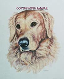 Golden Retriever - Portrait by Cindy Farmer