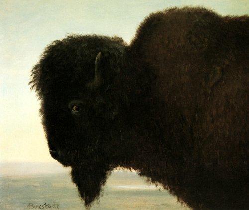 BUFFALO HEAD WILD NATIVE BISON BY ALBERT BIERSTADT 16