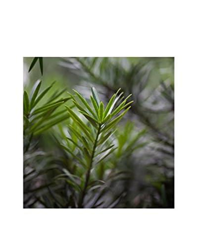 CM Creation Cuadro Decoplex 30X30 Plantas