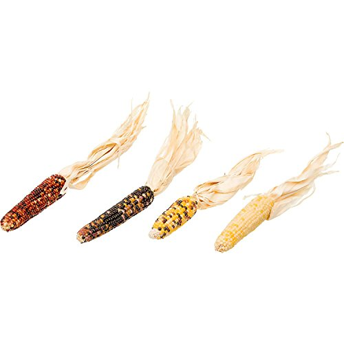 Browns-Tropical-Carnival-Mini-Corn-on-the-Cob-with-Husks-Foraging-Treats