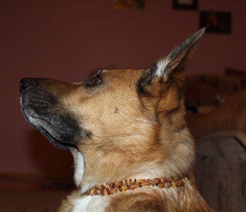 Flea Collars For Cats Amazon