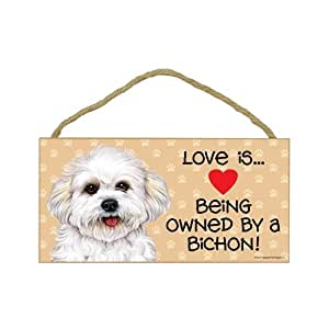 Amazon.com : Bichon Frise (puppy cut / short hair cut) (Love is being