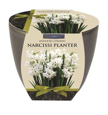 Indoor 'pewter' ceramic pot with Narcissus Paperwhite bulbs and compost.