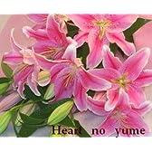 大輪系ピンクユリ 5本 ラッピングなし 花束 記念日 お祝い 送別花の贈り物 結婚祝い 結婚記念日 還暦祝い 誕生日プレゼントなど