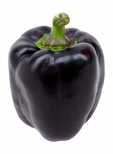 Seeds and Things Purple Beauty Bell Pepper 50 Seeds