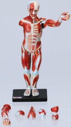 TFC 原色人体解剖図鑑II 完全版