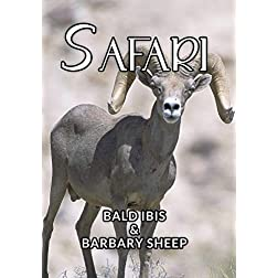 Safari The Bald Ibis And Barbary Sheep