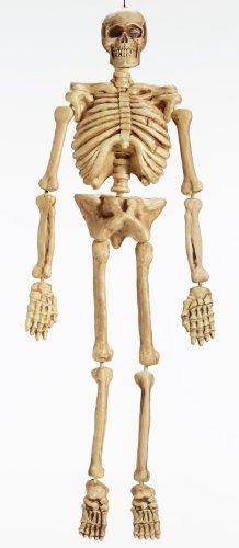 Skeleton 5ft