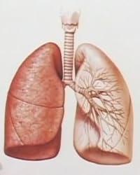 『医心伝心』呼吸器の病気【医療福祉チャンネル】(1WeekDVD)