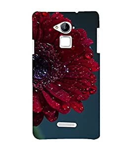 printtech Nature Flower Macro Back Case Cover for Coolpad Note 3
