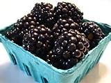 BLACKBERRIES FRESH PRODUCE FRUIT VEGETABLES 6 OZ