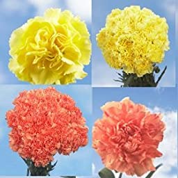200 Fresh Cut Fall Color Carnations | Fresh Flowers Wholesale Express Delivery | Perfect for Birthdays, Anniversary or any occasion.