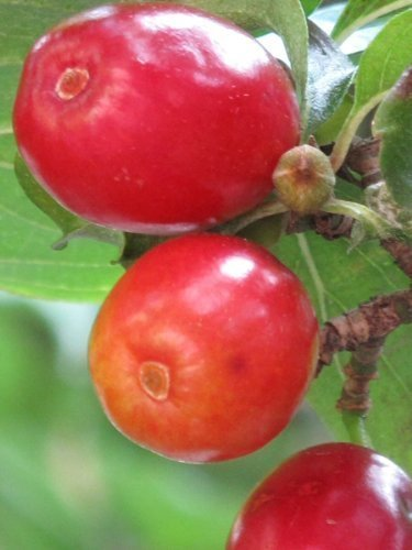 tree-seeds-online-orchard-collection-fruit-and-nut-trees-over-90-seeds-x1-packs