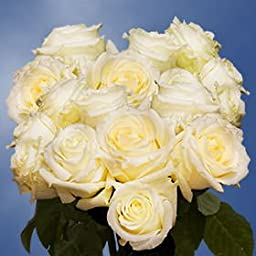 75 Fresh Cut White Wedding Roses Long Stem | Blizzard Roses | Fresh Flowers Express Delivery | Perfect for Weddings, Anniversary or any occasion.