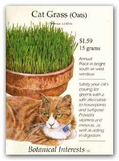 Cat Grass Seeds 500 Seeds
