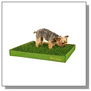 DoggieLawn Disposable Dog Potty - REAL Grass - MEDIUM 24x21