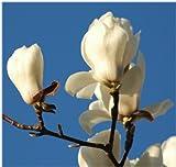 「12か月の花香水」 東山植物園の自然の花の香りから生まれた香水です。 (3月 モクレン)