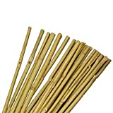 Set of 10 Natural Bamboo Canes