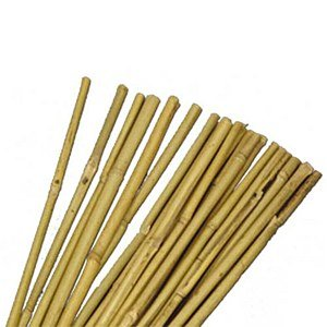 Set of 20 Natural Bamboo Canes