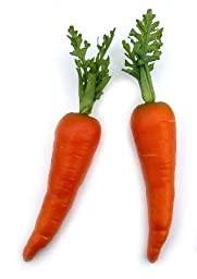 Artificial Country Carrot, Bag of 12 in 2 Sizes