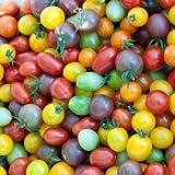 Kirschtomaten 20 Samen 'Regenbogen-Mix' Cherry-Tomate -Alle Farben in einem Paket