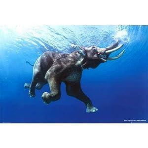 (24x36) Steve Bloom (Swim, Elephant) Art Poster Print