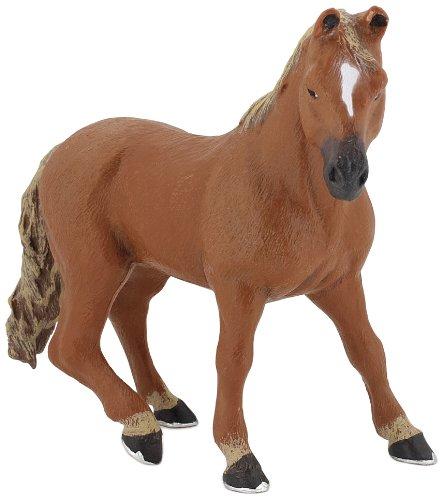 American Quarter Horse - 1