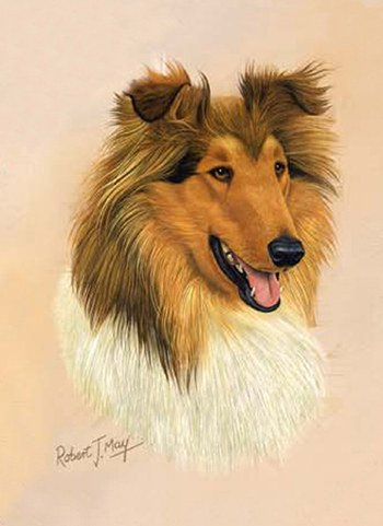 Collie Playing Cards - Art by Robert May - 1