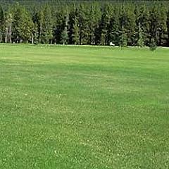 芝の種:西洋芝ハードフェスク・ハードトップ1kg[耐暑性 法面緑化/飛砂防止/ゴルフ場/公園]