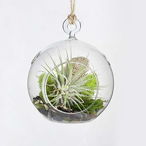 MakersKit Hanging Air Plant Terrarium