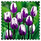300pcs/bag True Tulip Bulbs,tulip Flower,Flowers Symbolizes Love,tulipa Gesneriana Flower Plant For Home Garden