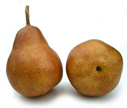 Artificial Brown Bartlet Pear - Box 12