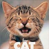 猫ちゃんの好きな音楽 ストレス解消のためのミュージック・ビタミン