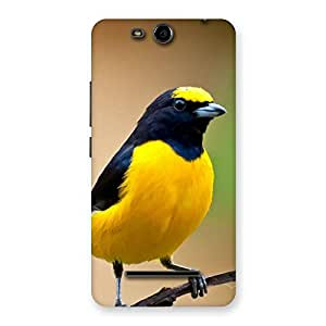 Enticing Sweet Bird Back Case Cover for Micromax Canvas Juice 3 Q392