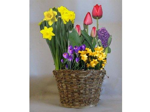 Spring Bulb Garden Gift Basket