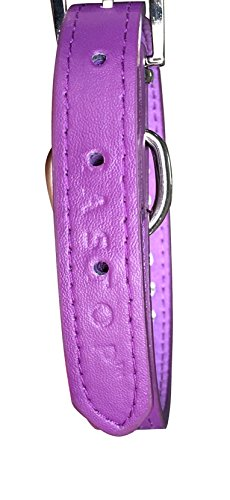 Pets-House-Dog-Collars-for-Small-Dogs-Prime-Medium-Purple