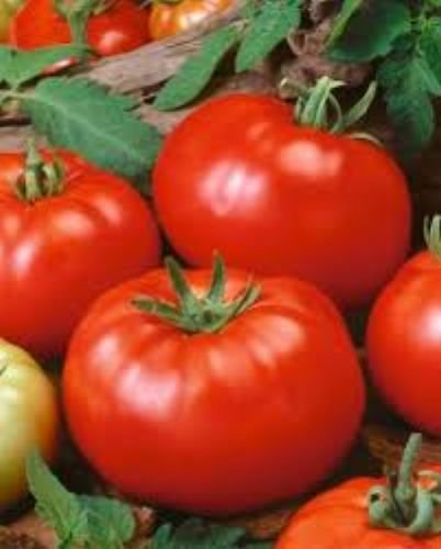 100 Beefsteak Tomato Seeds (Slicing Tomato Seeds compare prices)