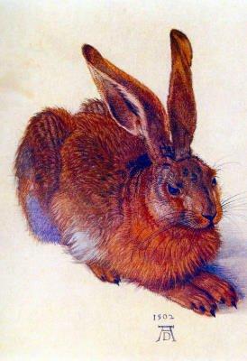 Field Hare by Albrecht Durer