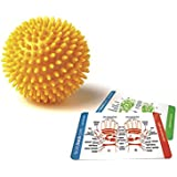 "Porcupine Sensory Massage Ball 3"" inches (Color may vary)"