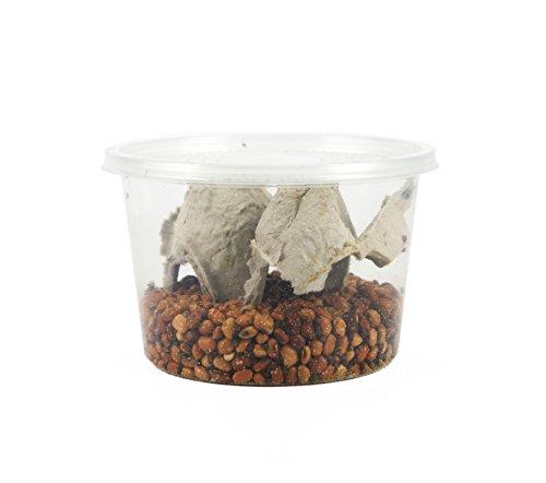 joshs-frogs-bean-beetle-culture-16-oz