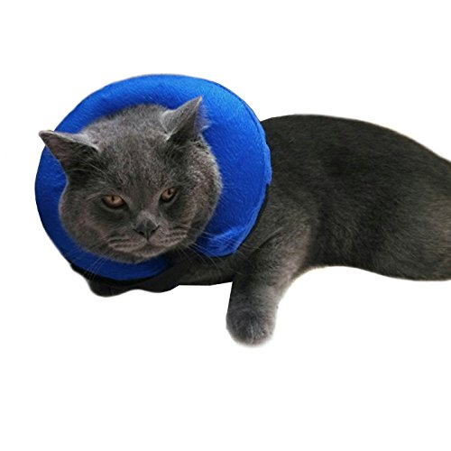 Can A Cat Sleep With A Cone On