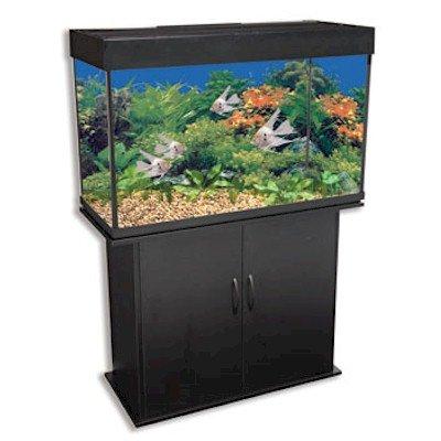Corner fish tank penn plax 46 gallon aquarium tank and for Fish tank and stand combo