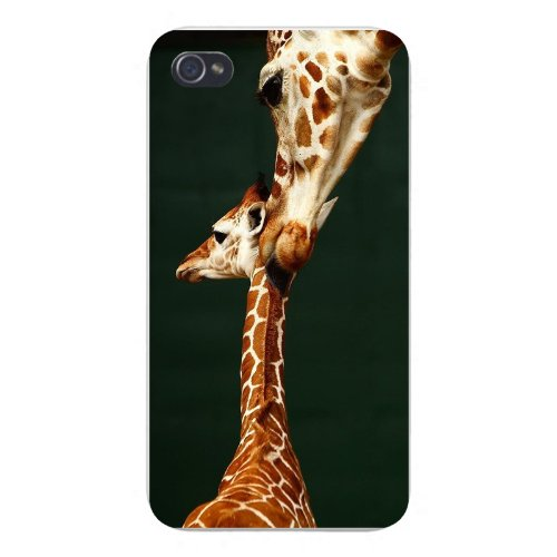 Apple Iphone Custom Case 5 / 5S White Plastic Snap On - Mother & Baby Giraffe Grooming Cute front-861174