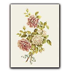 Roses, variegated red/white - Gift Enclosure Cards (set of 12)
