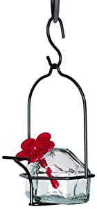 Parasol LP1CL1 3 by 6-Inch Lunch Pail 1 Hummingbird Feeder, Clear