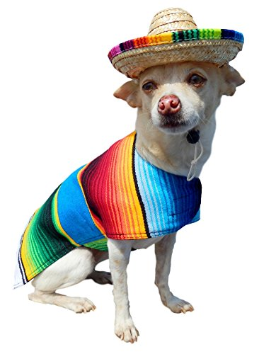 Yorkie Clothes - Dog Costume - Handmade Dog Poncho from Authentic Mexican Blanket by Baja Ponchos (Fringed Edge, X-Small )