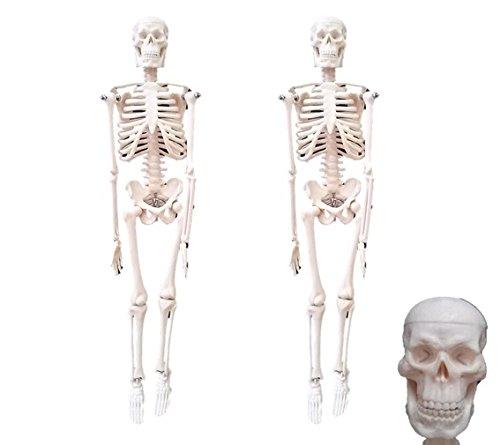 【エスネット】S-net ミニチュア 骸骨 人体 模型 スタンド付き 45 cm SN-JM (45cm 二体 セット)