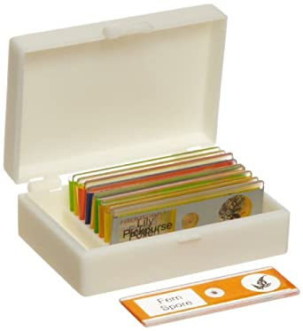 American Educational Plastic Plant Microscope Slide Set in Plastic Storage Box (Bundle of 50)