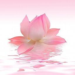 Startonight Glass Wall Art Acrylic Decor Pink Petals, 5 Stars Gift 23.62 X 23.62 Inch 100% Original Flowers Artwork the Ultimate Wall Art